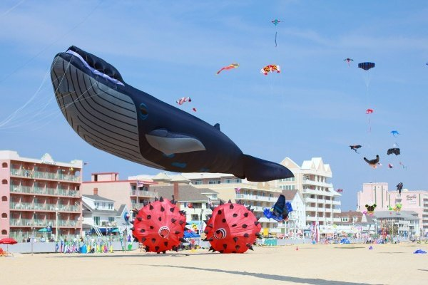 Maryland International Kite Expo
